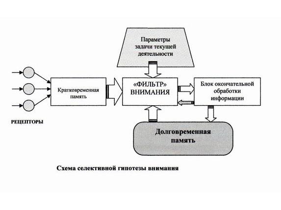 Схема селективной гипотезы внимания