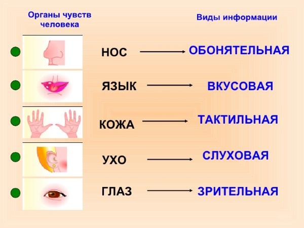 Виды органов чувств