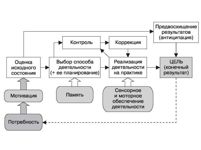 Функционально-динамический анализ деятельности