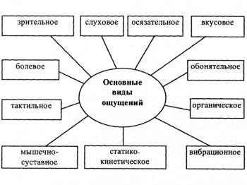 Основные виды ощущений