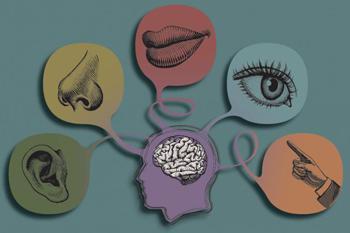 Разновидности ощущений в психологии