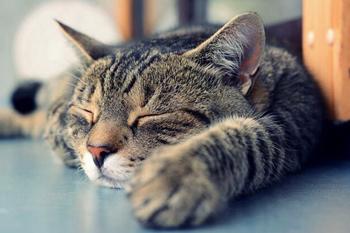 Смерть любимого кота