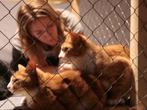 Волонтерство в приюте для животных