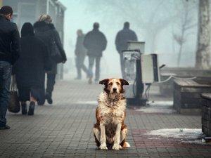 Возможность приютить бездомное животное в качестве нового питомца