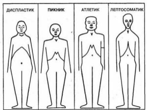 Классификация телосложения Кречмера