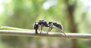 Страх перед насекомыми