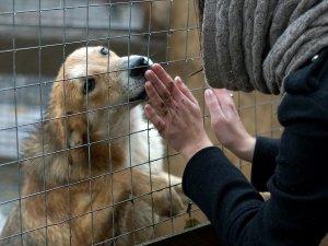 Волонтерство в приюте как способ пережить смерть животного