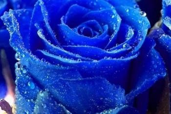 Значение синего цвета