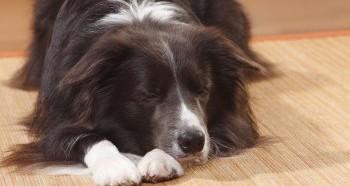 Необходимость пережить смерть собаки